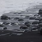 Black Sand Beach, Maui by muddylilac