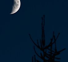 moon and tree, sept 13th by jude walton