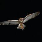 Owl on the Farm by CherylBee