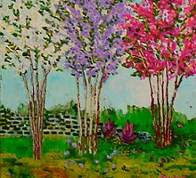 Crepe Myrtles in the front yard by angela  annas