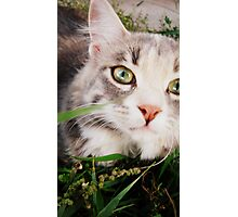 kitteh in the grass Photographic Print