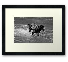 Water Dog - Little Miami River Framed Print
