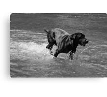 Water Dog - Little Miami River Canvas Print