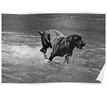 Water Dog - Little Miami River Poster