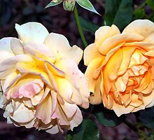 Sublime pair by ♥⊱ B. Randi Bailey