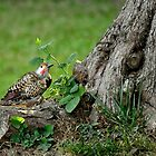 woodpecker by Jeannie Peters
