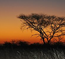 African Tree by Denise Ray