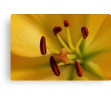 Yellow Lily #1 Canvas Print