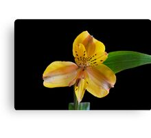 Yellow Tiger Lily #1 Canvas Print