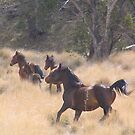Brumbies fleeing - Ingeegoodbee Flat by Nicola  Fanning