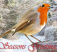 Seasons Greetings by Norfolkimages