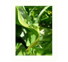 Green Vegetable Bug Art Print