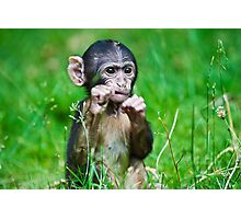 One step closer,,,,,,,,,,,,,  Eight week old Monkey Photographic Print