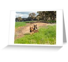 Ross & Missy......Young Kelpies..... Greeting Card