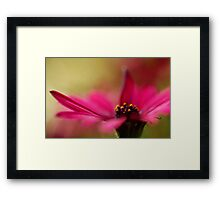 Pink and Dreamy Framed Print
