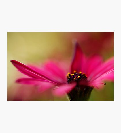 Pink and Dreamy Photographic Print