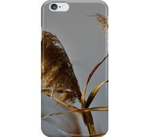 Canes 3 iPhone Case/Skin