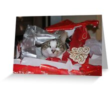A Cat for Christmas Anyone? Greeting Card