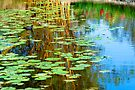 In search of Monet by Renee Hubbard Fine Art Photography