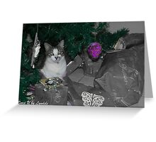 Cat in the Wrap for Christmas Greeting Card