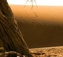 Sossusvlei Dune Formations - Namibia by Namibia Tours  & Safaris