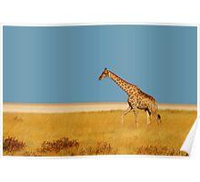 Lone giraffe - Etosha Park, Namibia Poster