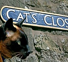 Cat's Close, Culross, Fife, Scotland, UK by simpsonvisuals