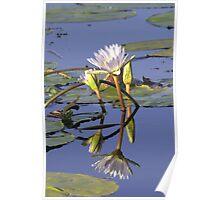 Lilies - Okavango Delta, Botswana Poster