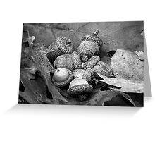 Acorns and Oak Leaves in Black and White Greeting Card