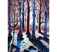 'Sunset Woods' Photographic Print