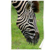 Zebra close-up - Etosha Namibia Poster