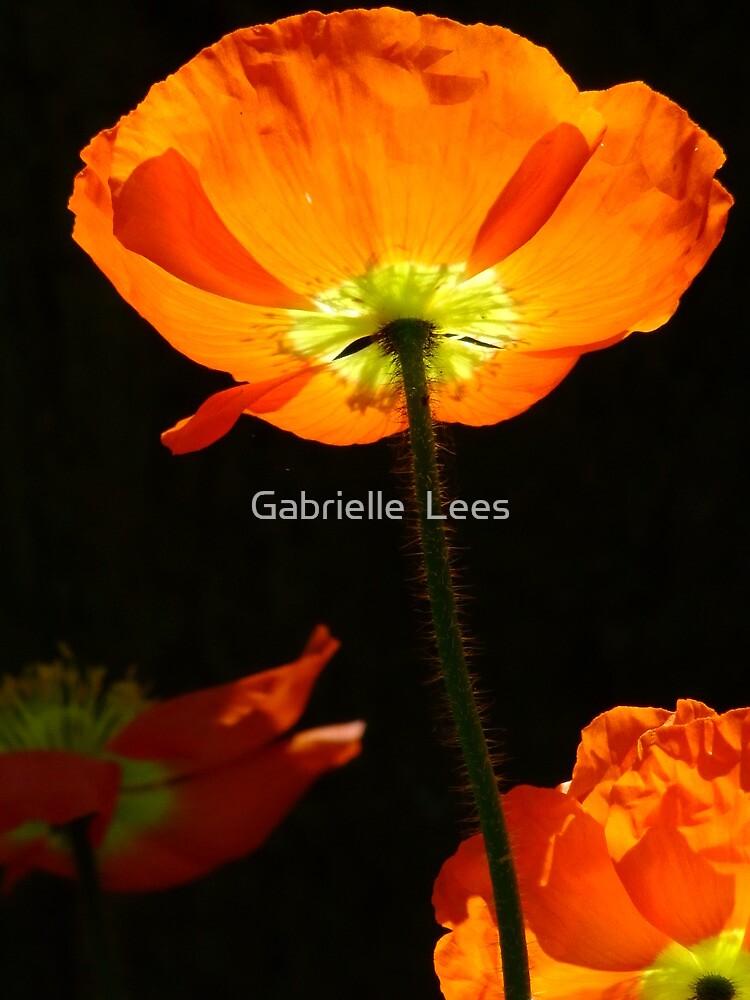 Poppy so Bright! by Gabrielle  Lees