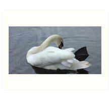 Swaning around - river swan Art Print