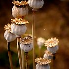 Group of seed pods by Karen  Betts