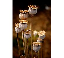 Group of seed pods Photographic Print