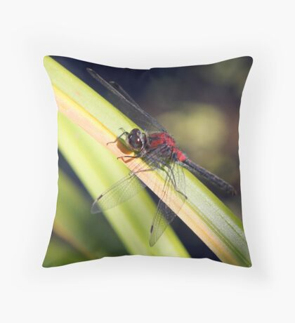 Red, White and Black: The Striking Belted Whiteface Throw Pillow