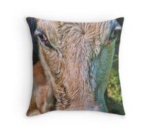 Cow Face Throw Pillow