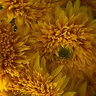 Frilly Double Sunflowers by Ann Garrett