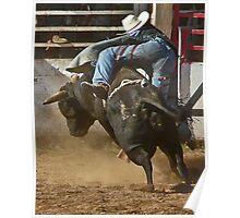 Bull butts Poster