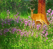 A Bouquet For A Deer by Linda Miller Gesualdo