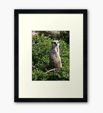 Cant Sneak Anything Past Me Framed Print