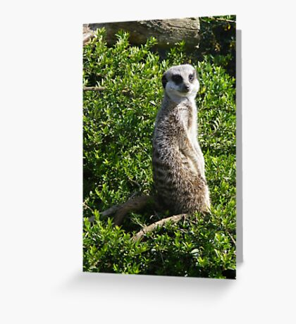 Cant Sneak Anything Past Me Greeting Card