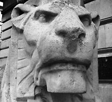 Stoney faced Lions of Nottingham by Matt Buckland