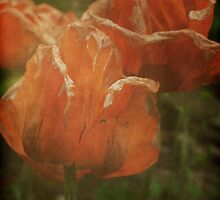 Fading Poppies by Lenore  Humes