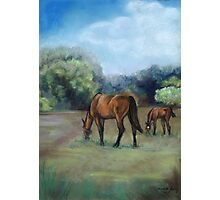 Horse Pasture Pastel Painting Photographic Print