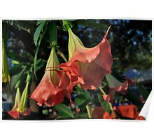 Angels Trumpets Poster