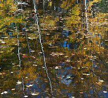 Autumn Reflection by Susan R. Wacker