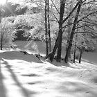 Ice Storm by Susan R. Wacker
