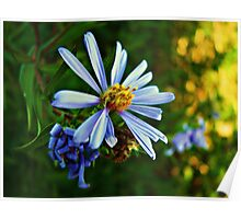 Blue Daisy Poster