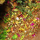 Natural Pot Pourri by sarnia2